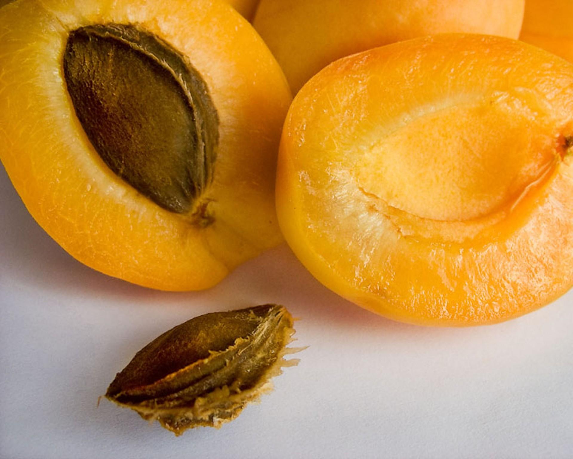 Как из косточки вырастить абрикос? Видео и пошаговая 27