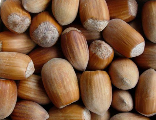 КРУПНОМЕРЫ. Плодовые деревья «Фундук ВЕРЕСНЕВЫЙ, 4 года»