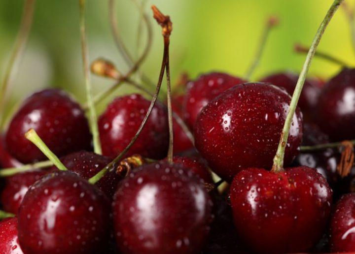 КРУПНОМЕРЫ. Плодовые деревья «ВИШНЯ, 5 лет»