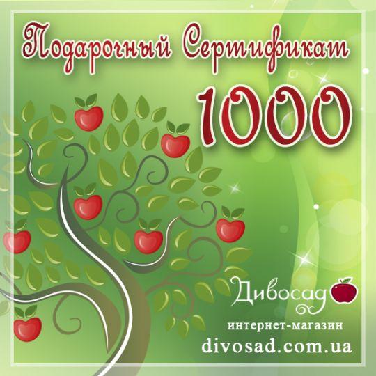 ПОДАРОЧНЫЙ сертификат «1000»