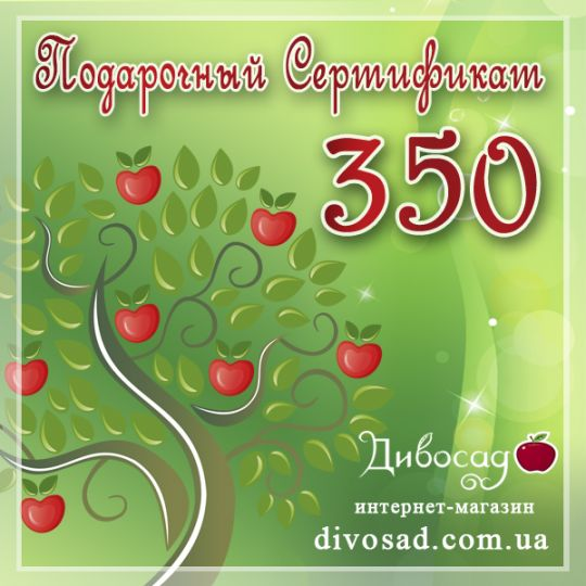 ПОДАРОЧНЫЙ сертификат «350»