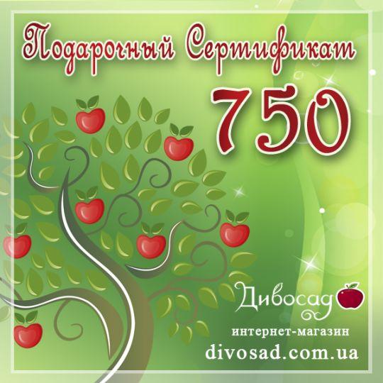 ПОДАРОЧНЫЙ сертификат «750»