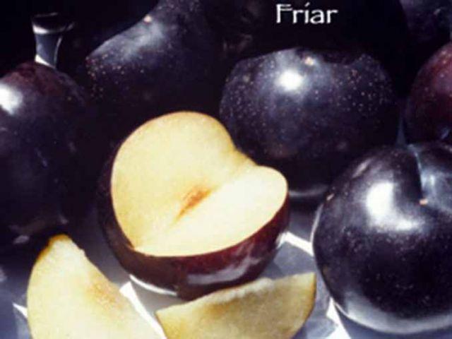 СЛИВА «ФРИАР/Friar»