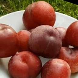 Перкоче РОМЕА - гибрид персик -слива