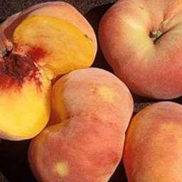 Инжирные сорта персика СВИТ БАГЕЛ, 2 года
