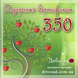 ПОДАРОЧНЫЙ сертификат 350