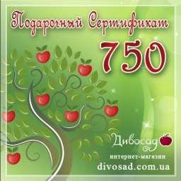 ПОДАРОЧНЫЙ сертификат 750