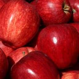 Двухлетние саженцы яблони РОЯЛ ГАЛА, 2 года
